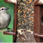 Possible $100 for Morning Song Bird Food Class Action Settlement