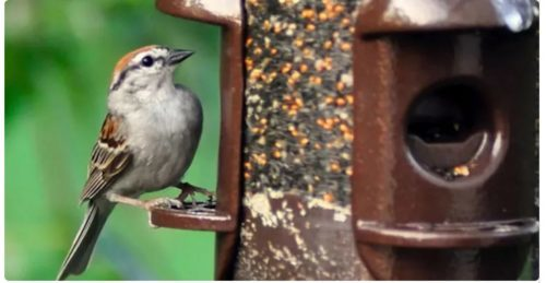 Possible $100 for Morning Song Bird Food Class Action