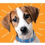 Petco – Free Puppy Playtime Events